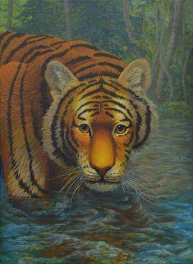 Взгляд юного тигра