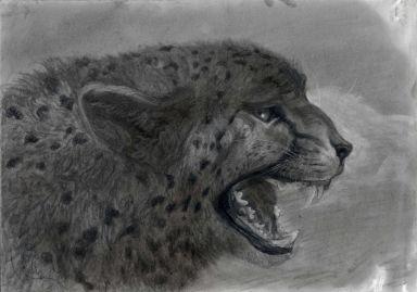 Гепард с приоткрытым ртом