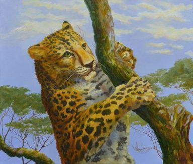 Молодой леопард на дереве