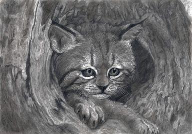 Дикий лесной котенок в дупле