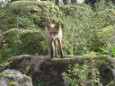 лисы (Фотографии)