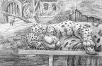 Сон Ягуара в Клетке (Анималистика)