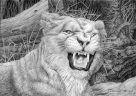 Львица защищает свое логово (Анималистика)